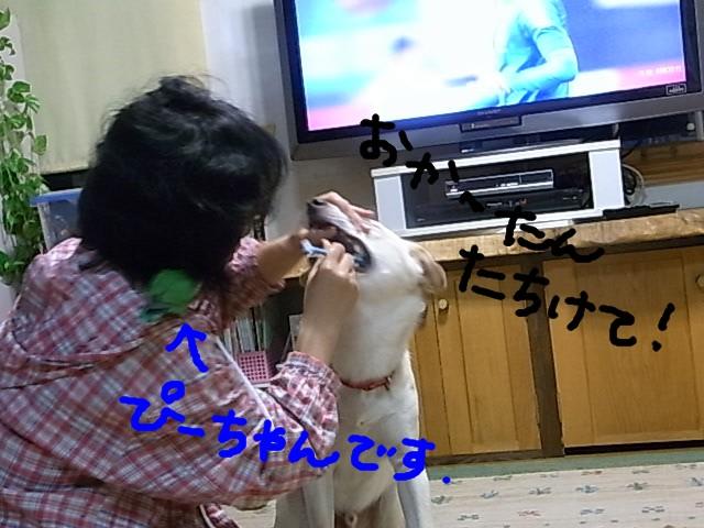 RIMG0607_20110602213709.jpg