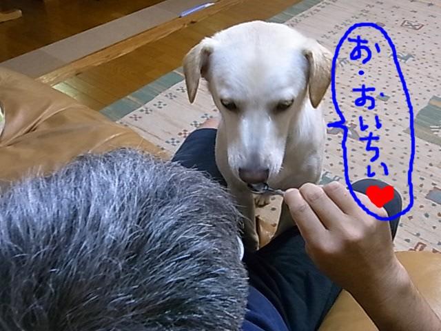 RIMG0984_20110627221057.jpg