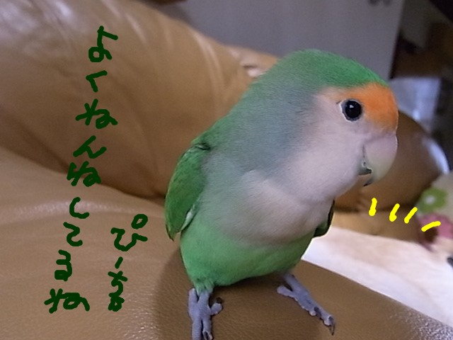 RIMG1099.jpg