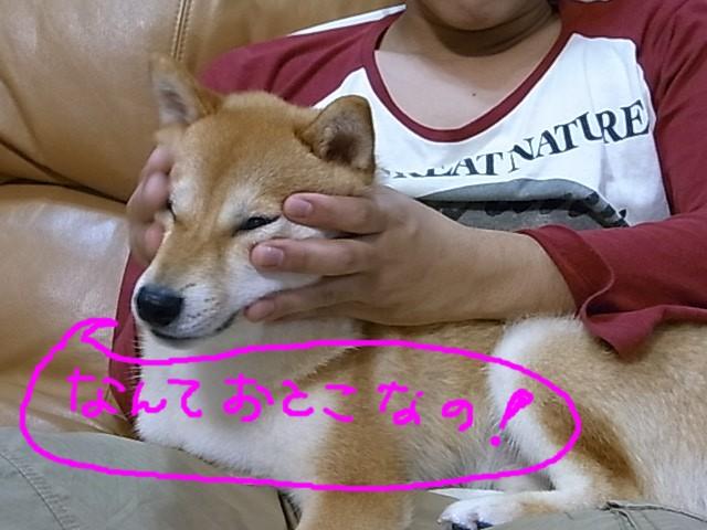 RIMG1532_20110621215206.jpg
