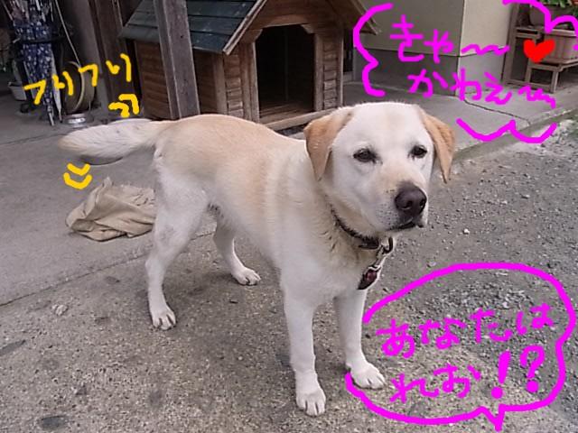 RIMG1816_20110630221140.jpg