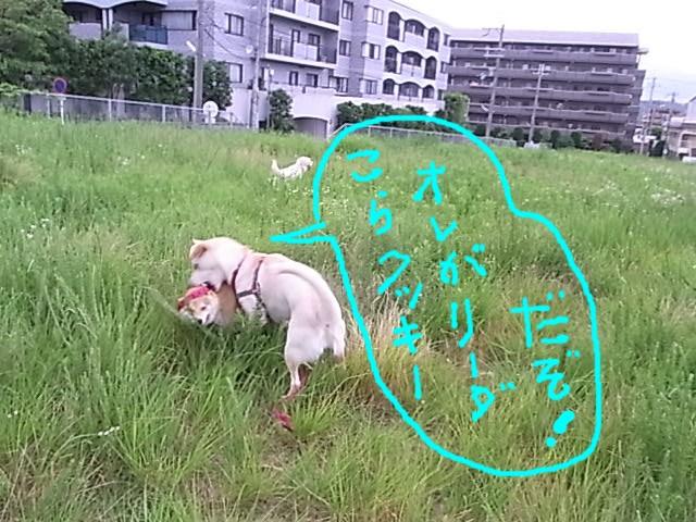 RIMG2148_20110704213401.jpg