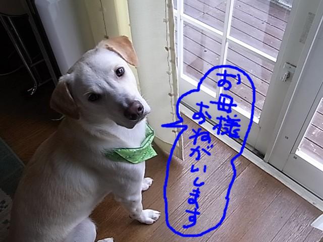 RIMG3194_20110729223558.jpg