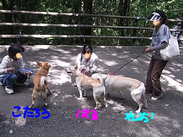 RIMG5527_20110925214846.jpg