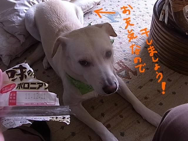 RIMG6447_20111026215414.jpg