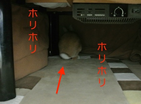 DSC_8130.jpg