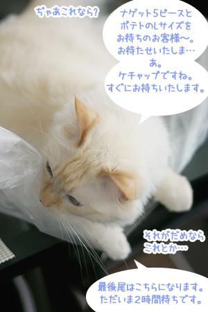 20100522_4.jpg
