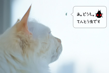 20100614_4.jpg