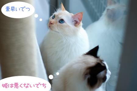 20100614_6.jpg