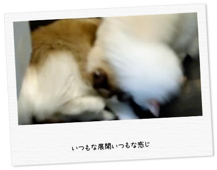 20100625_2.jpg