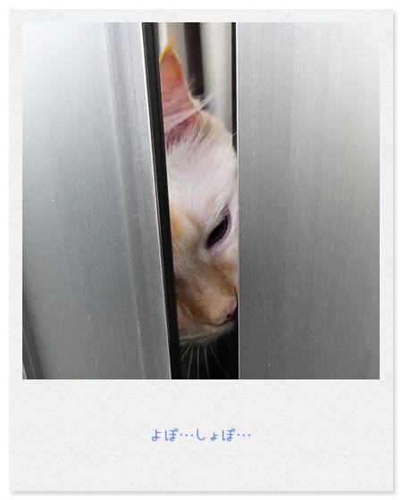 20100627_3.jpg