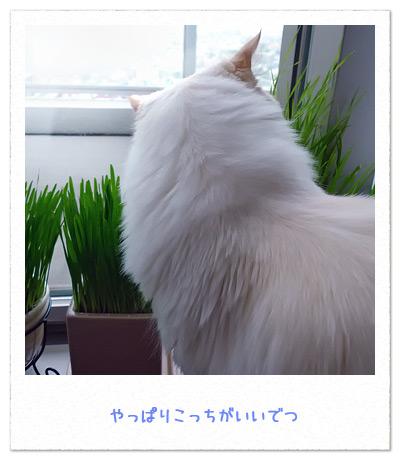 20100722_4.jpg