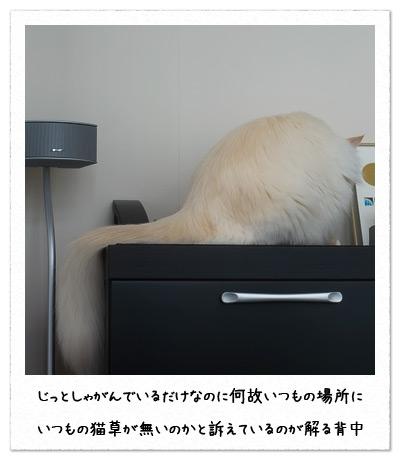 20100722_8.jpg