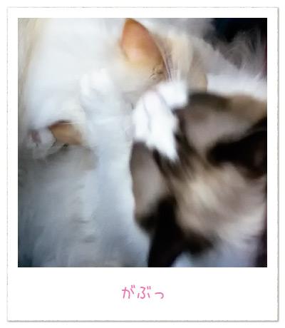 20100909_6.jpg