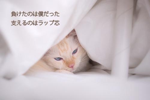 20101119_10.jpg
