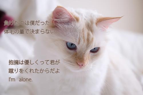 20101119_6.jpg