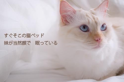 20101119_7.jpg