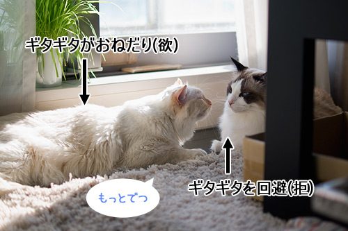 20110111_5.jpg
