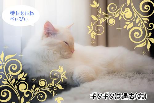 20110111_6.jpg