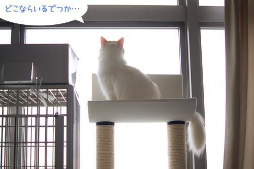 20110114_4.jpg