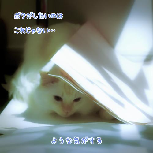 20110121_7.jpg