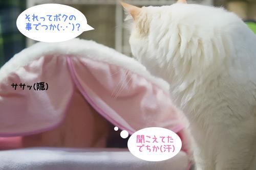 20110126_4.jpg