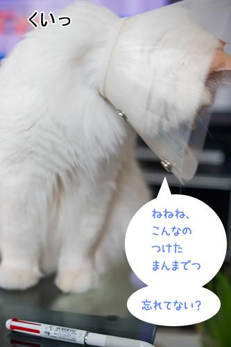 20110131_7.jpg