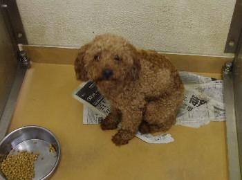 千葉県富里市動物愛護センターレポート