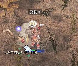 2009,12,23しおバラ3