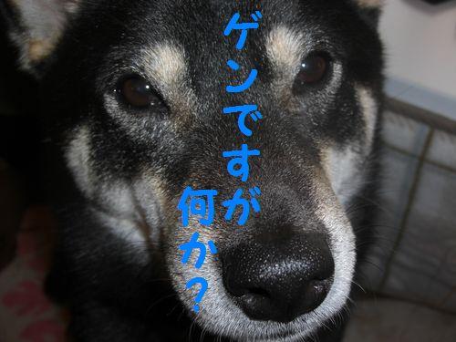 CIMG3292.jpg