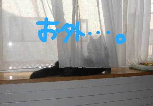 CIMG3476.jpg