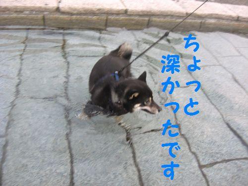 CIMG4363.jpg