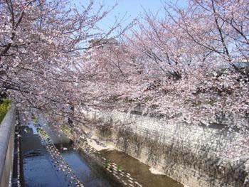 20110406桜