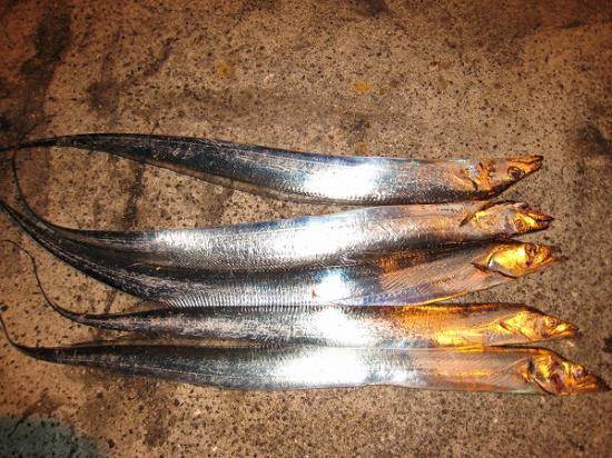 2009/10/28太刀魚5匹