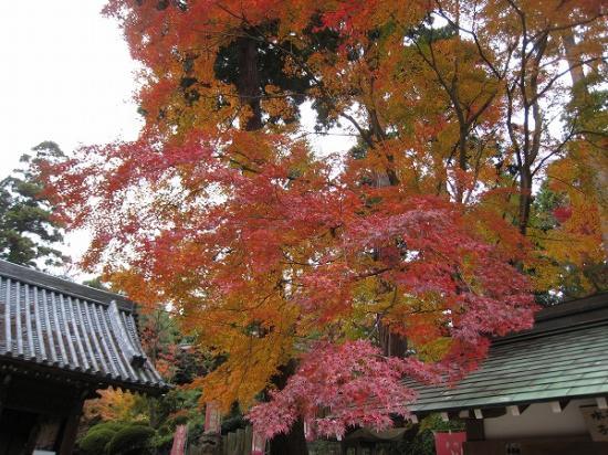 2009/11/16白峯寺紅葉1