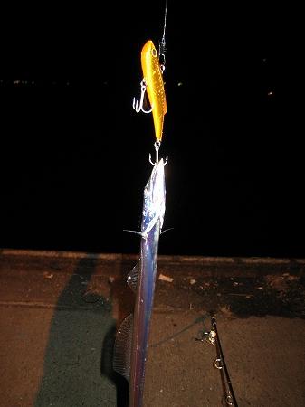 2009/11/18しんた太刀魚2