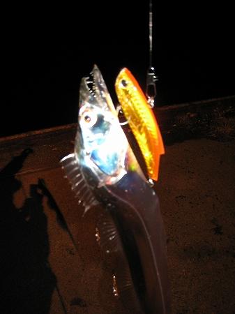 2009/11/18しんた太刀魚5
