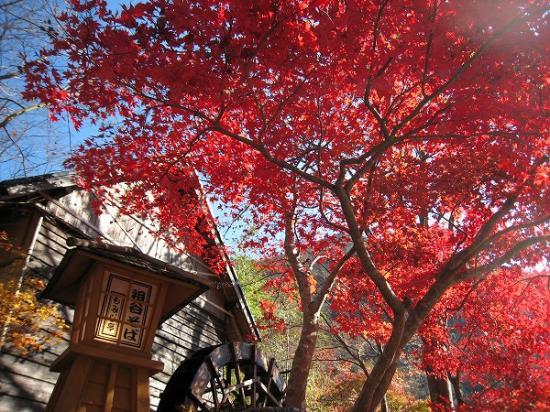 2009/11/23West-West紅葉3