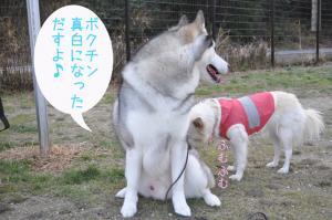01.10愛ハス4