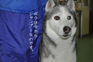01.10愛ハス