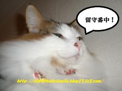 P2010017.jpg