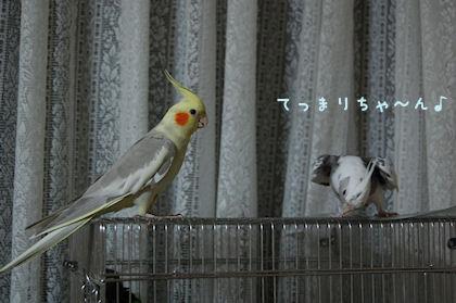 20110330-3.jpg