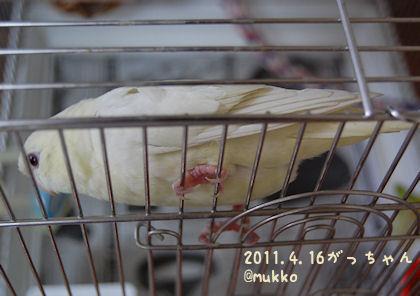 20110416sazagachi.jpg