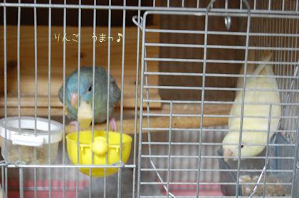 20110501ssubako.jpg