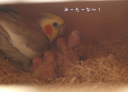 20110501subako2.jpg