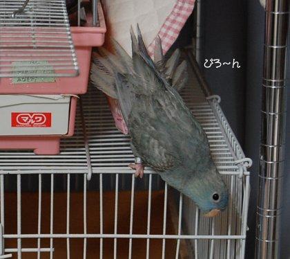 20110504mina.jpg