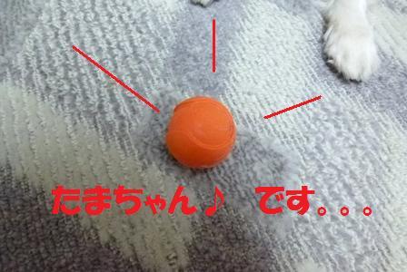 P1050693.jpg