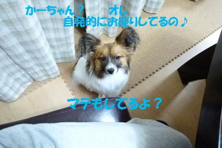 P1060404.jpg