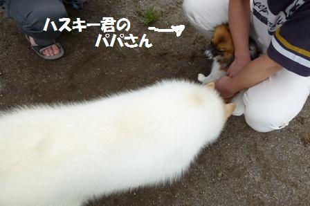 P1080463.jpg