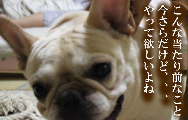 03_20110615014730.jpg